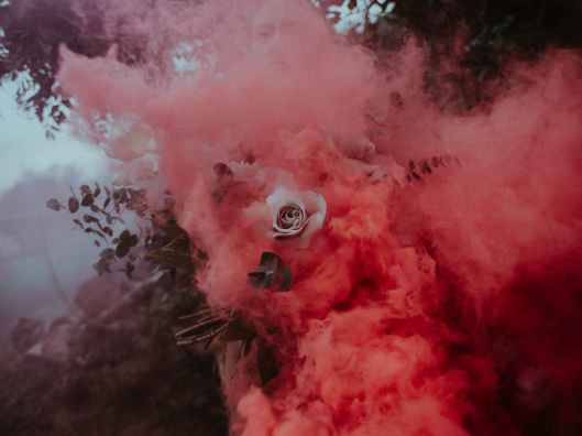 white rose and pink smoke